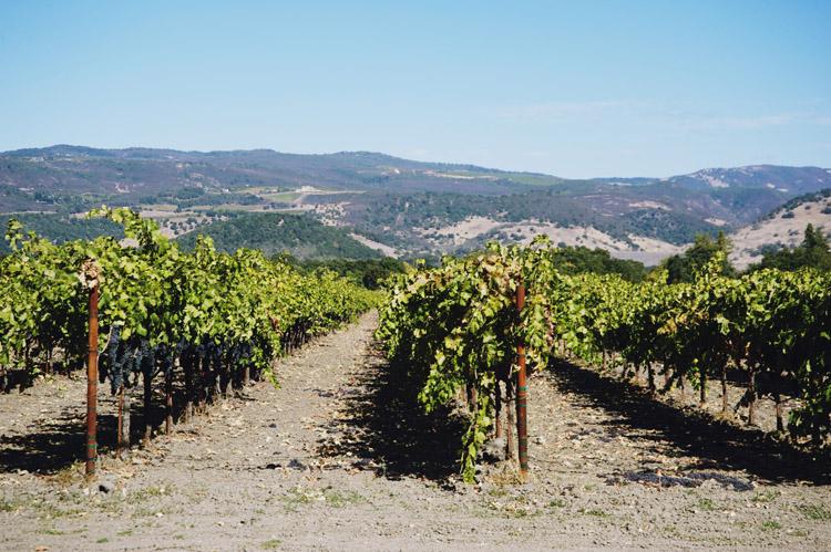 Wine Tasting Napa Valley
